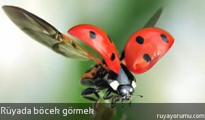 Rüyada Böcek Görmek