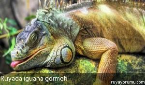 Rüyada İguana Görmek