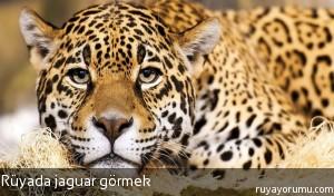 Rüyada Jaguar Görmek