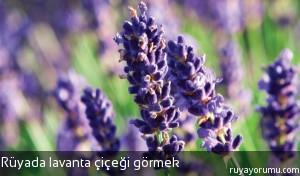 Rüyada Lavanta Çiçeği Görmek