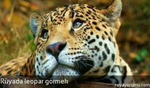 Rüyada Leopar Görmek