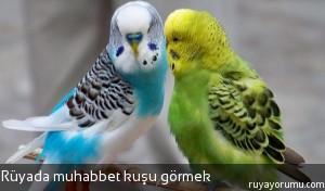 Rüyada Muhabbet Kuşu Görmek