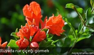Rüyada Nar Çiçeği Görmek