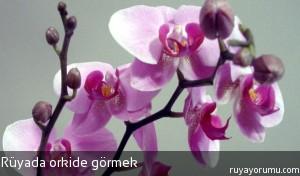 Rüyada Orkide Görmek