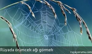 Rüyada Örümcek Ağı Görmek