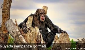Rüyada Şempanze Görmek