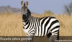 Rüyada Zebra Görmek