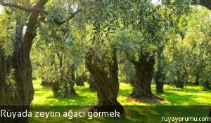 Rüyada Zeytin Ağacı Görmek
